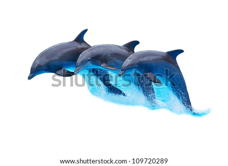Three Bottlenose Dolphins, Tursiops truncatus, leaping in formation isolated on white - stock photo