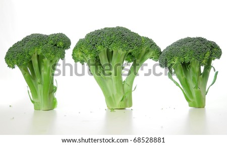 Three broccoli vegetables standing on a white shiny table isolated on white background. - stock photo