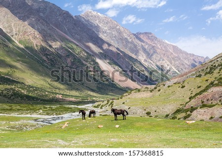Three brown horses in high Tien Shan mountains, Kyrgyzstan - stock photo