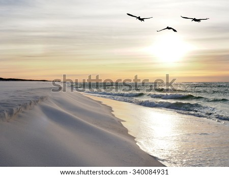 Three Brown Pelicans Fly Over a White Sand Florida Beach at Sunrise - stock photo