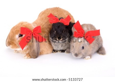 three bunny wearing a red bow and lying on a white background