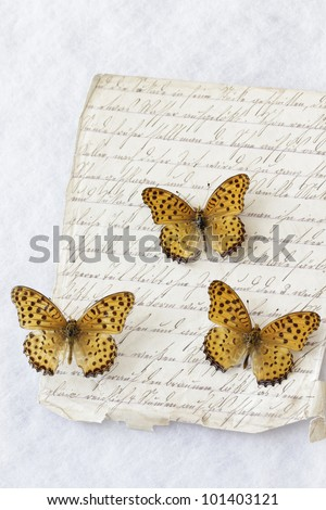 Three butterflies (Argyreus Hyperbius) on old handwritten page - Indian Fritillary