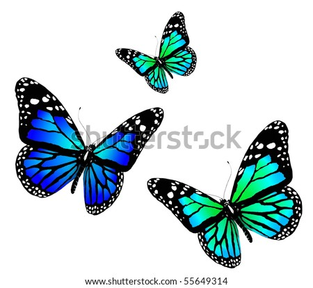 Three butterflies of blue color on a white background