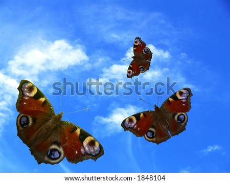 Three butterfly on sky background