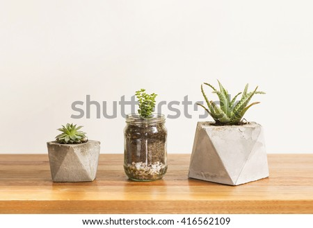 Three cactus and succulent concrete planters, interior style