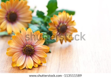 Three calendula flowers on wooden table. Marigold in summer. - stock photo
