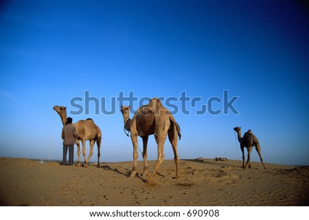 Three camels - stock photo