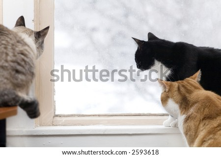 Three cats watch the birds outside on a snowy day - stock photo
