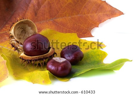 three chestnuts over yeloow leaf
