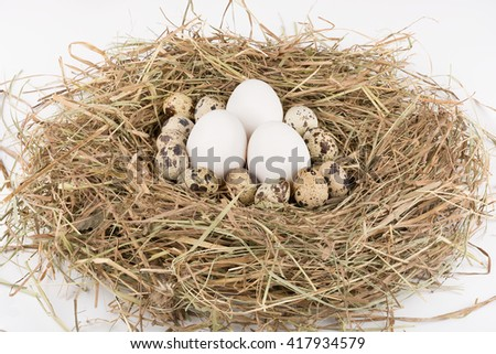 Three chicken and quail eggs in nest of straw. On white background