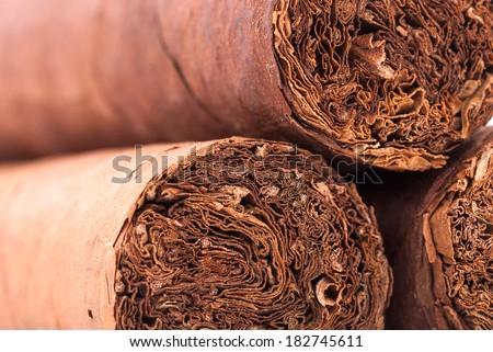 Three cigars closeup. - stock photo