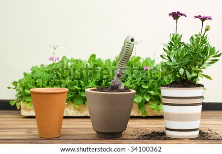 Three Clay Flower Pots in a Row, Different Stages of Potting