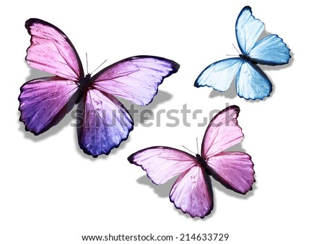 "Three color butterfly ""morpho"", isolated on white background - stock photo"