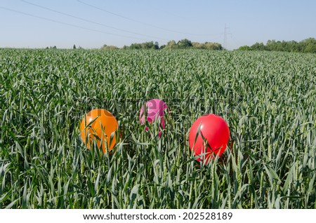 three colorful big balloons on rye crop field and blue summer sky  - stock photo