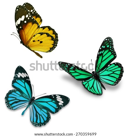 Three colorful butterfly, isolated on white background  - stock photo