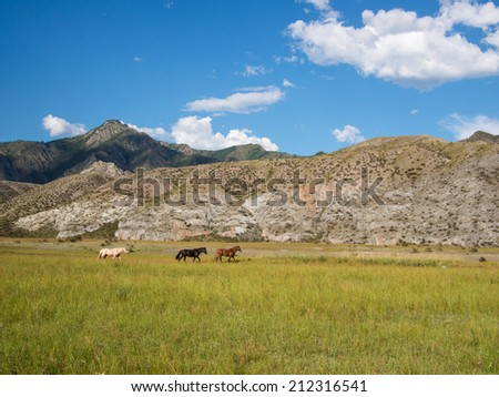 Three colorful horses are following each other on the field on a background of mountains