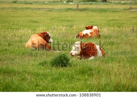 Three cows in green meadow - stock photo
