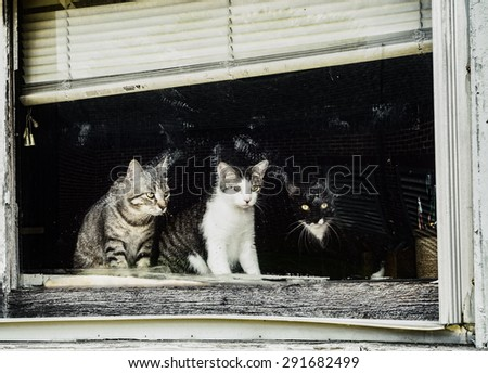 Three curious cats looking out of old dirty window. - stock photo