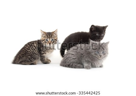Three cute baby kittens isolated on white background - stock photo