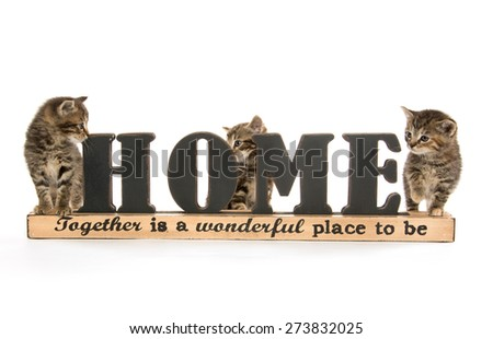 Three cute baby tabby kittens sitting with sign saying Home and isolated on white background - stock photo