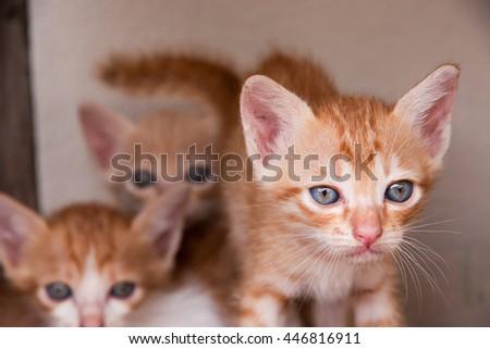 Three cute kitten on wood floor and white background. - stock photo