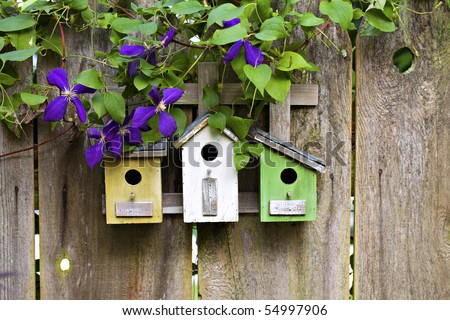 Three cute little birdhouses on rustic wooden fence with purple Clematis plant growing on them - stock photo