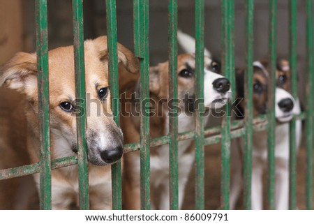 Three cute puppies locked in the cage - stock photo