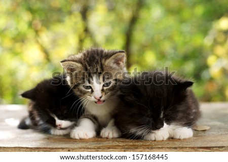 three cute small kitten. one striped gray and two black and white slipping on wooden board against green summer bokeh