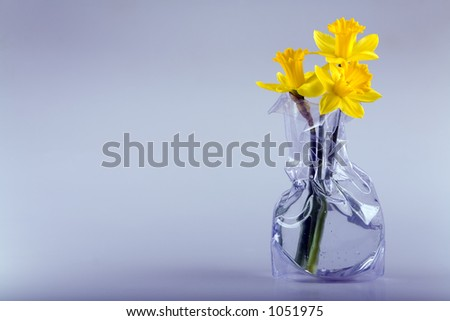 Three daffodil flowers in a modern vase with space for text. - stock photo