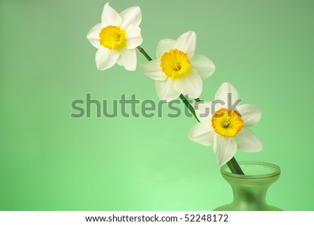 Three daffodils on green background - stock photo