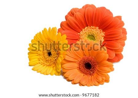 three daisies - stock photo