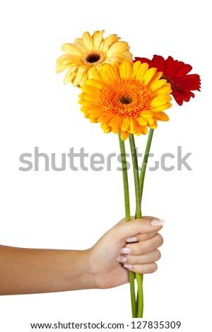 three daisy flowers in hand. Isolated over white background - stock photo