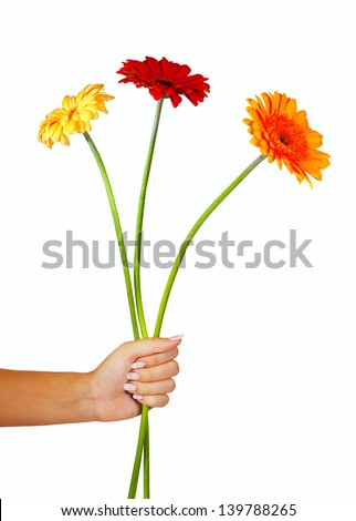 three daisy flowers in hand. Isolated over white background
