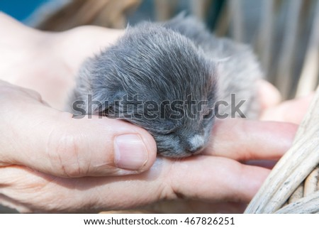Three days old kitten in old woman's hands