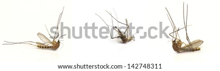 Three dead mosquito isolated on white - stock photo