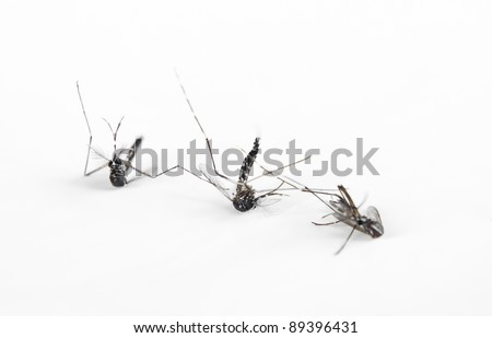 three dead mosquitoes isolated on white background - stock photo
