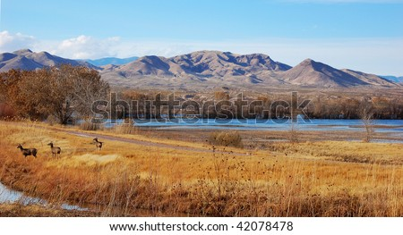 Three deer at Bosque del Apache national wildlife refuge, New Mexico - stock photo