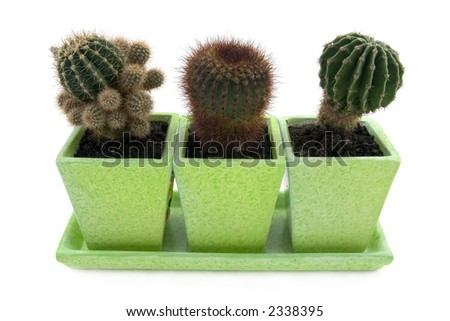 Three different cactuses in pots over white background - stock photo