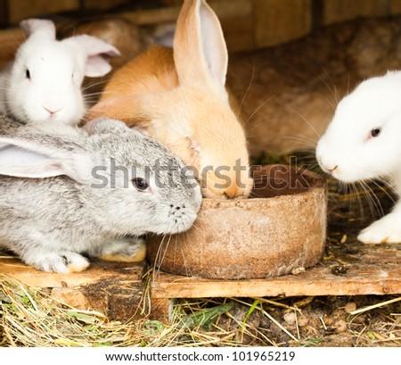 Three different rabbits closeup in hutch - stock photo