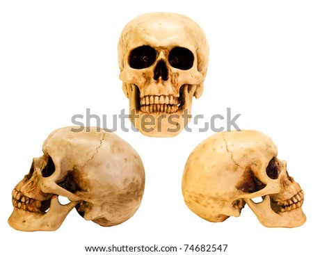 three different views of the human skull with clipping paths for each - stock photo