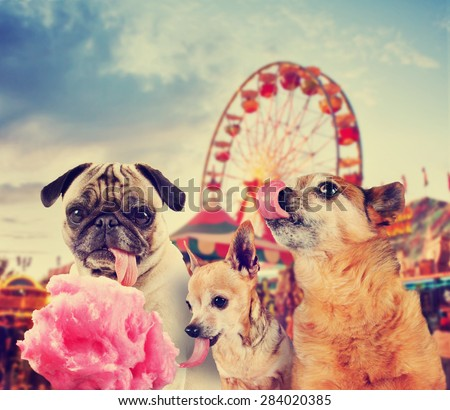 three dogs at a carnival of fair eating pink cotton candy toned with a retro vintage instagram filter effect app or action  - stock photo