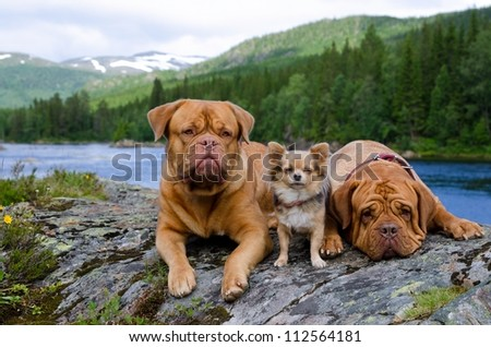 Three dogs at the mountain river bank, Finnmark, Norway - stock photo
