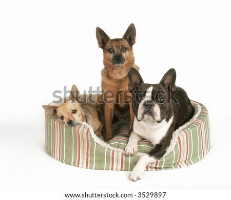 three dogs in a small pet bed