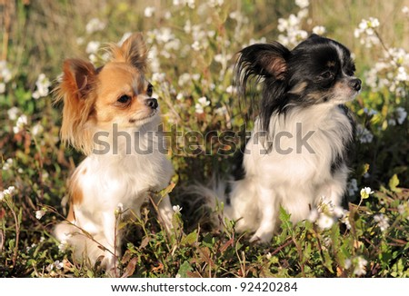 three dogs in the nature - stock photo