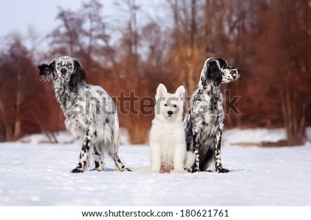 Three dogs in the snow - stock photo