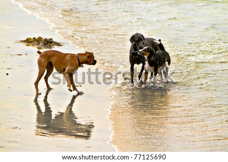 Three dogs of different breeds greeting each other on the dog beach in Del Mar California - stock photo
