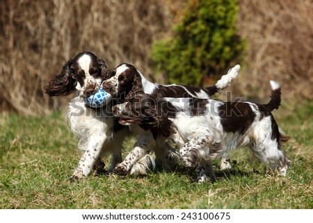 Three dogs playing with a ball - stock photo