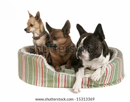 three dogs sharing a pet bed