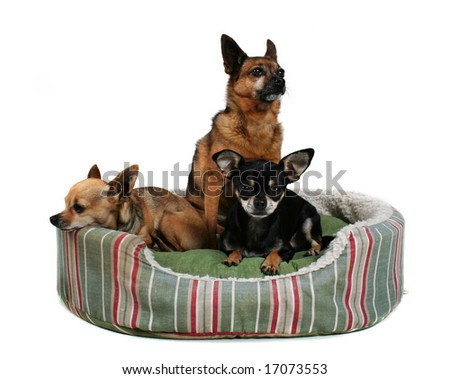 three dogs sharing a small pet bed