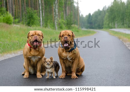Three dogs sitting on a road in a forest - stock photo